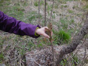 4-5月「ろうきん森の学校自然体験活動」を募集中♪:詳細ページを見る