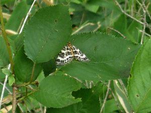 6月「ろうきん森の学校自然体験活動」を募集中♪:詳細ページを見る