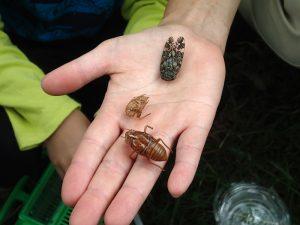 7月「ろうきん森の学校自然体験活動」を募集中♪:詳細ページを見る