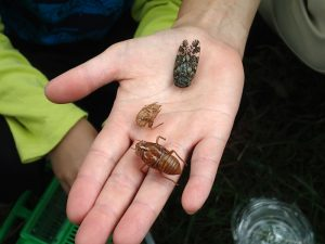8月「ろうきん森の学校自然体験活動」を募集中♪:詳細ページを見る