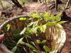 自然にふれる、木にふれる!『森工塾』を募集中(4月):詳細ページを見る