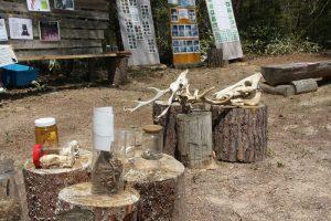 10/20「森の学校フェスティバル」を募集中♪:詳細ページを見る
